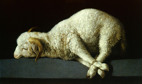 worty-is-the-lamb
